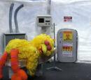 Big Bird Flu