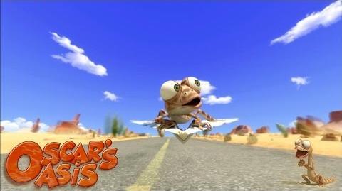 Lézard des airs - Oscar's Oasis