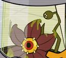 Flor Dacura-Repulsa