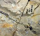 Ихтиозавры триасового периода