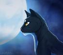 Moonlight13x2/Shadestar (Jujutheeverything13)
