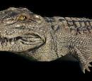 Крокодил альбинос