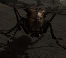 Попільний коник (Dragonborn)