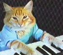 Fatso, the Keyboard Cat