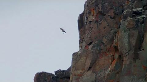 Chicks Jump Off Cliff Life Story BBC