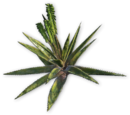 Растения Far Cry 3
