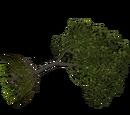 Fallen Tree (VGnome)