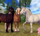 Köldtåliga hästraser