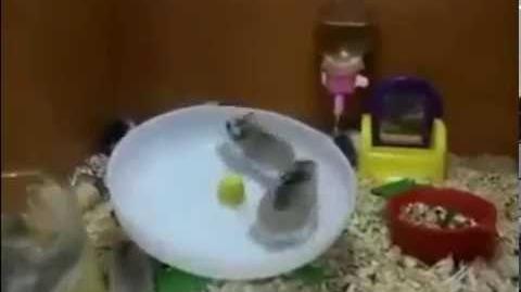 Gavin & Michael on a Hamster Wheel