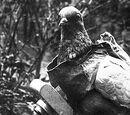 Camera Pigeon