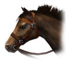 Horse (DWU).png