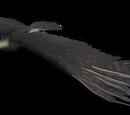Чёрный орёл