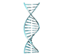 Código genético Kavat
