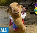 Zamel the Camel Has Five Humps