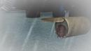 Koko Jumbo duduk di dalam kaleng.png