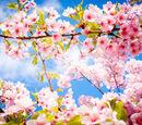 Поэзия:Коллективная весна