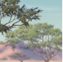 Acaciagrove-profile.png