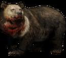 Призрачный медведь