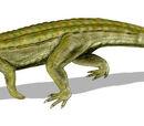 Supergoji93/Uberabasuchus