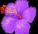 Vive violette