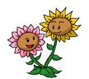 Twin Musical Sunflower