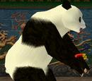 Panda/Outfits