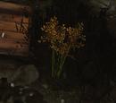 Бычий тростник для Джерома