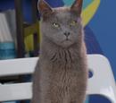 Christian Prey (Cat)