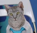 Don Drapurr (Cat)