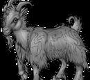 Goaten