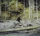 Bigfoot (Canon, Folklore)/Sans2345