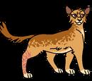 Leopardlight