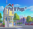 Pot O' Pugs