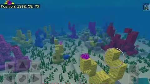I found a coral reef