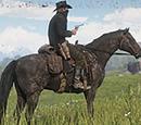 Cavalli di Red Dead Redemption II