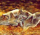 Волки из страны Далеко-далеко вики