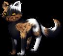 Pinestar's Choice Charaktere