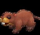 Beached Beaver
