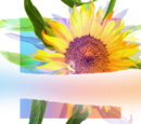 Re:flower Project 4