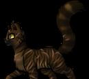 Tigerstern