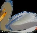 Great-billed Pelican