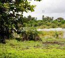 Bwawa Swamp