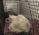 IJsdroom Vogeltje/Gedumpte kitten