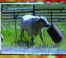 Sound Ideas, COW - SINGLE COW MOO, ANIMAL 02