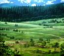 Лес гигантских деревьев
