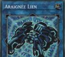 Araignée Lien