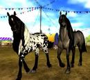 Friesian Sport Horse