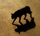 ShadowClan (Arrownerd)