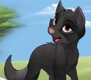 Luipaardklauw: Black