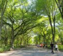 Lincliff City Park